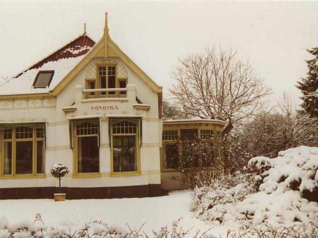 Mimosa in de sneeuw 2000